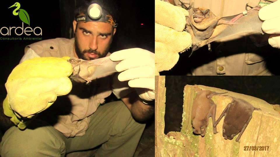 Conservação de Morcegos no RS